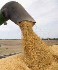 cosecha de soja